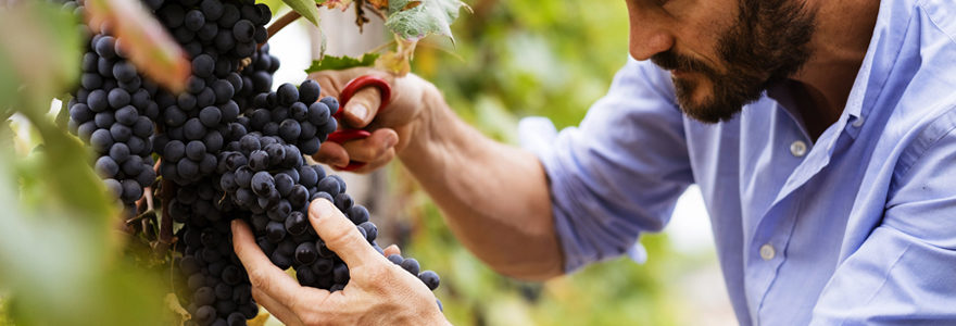 Vin de qualité chez des artisans vignerons